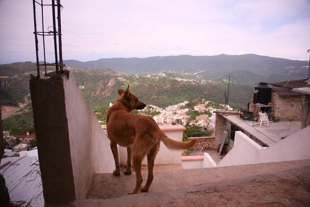 Dog Surveying His Kingdom, Taxco by katw0man