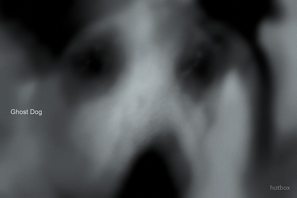 Ghost Dog by hotbox