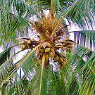 Coconut Palm Tree by Elizabeth  Lilja