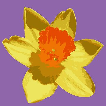 Spring Daffodil Vector Isolated by taiche