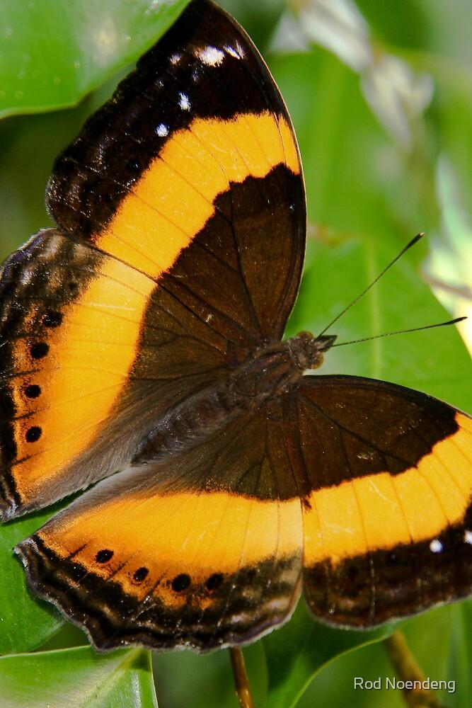 Butterfly III by Rod Noendeng