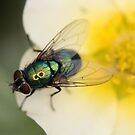 Greenbottle by Christopher Cullen