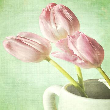 Spring Tulips by flossyrandle