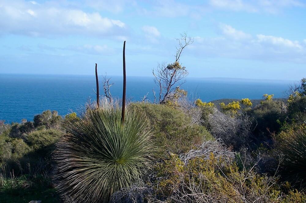 landscape, Deep Creek, South Australia by janfoster