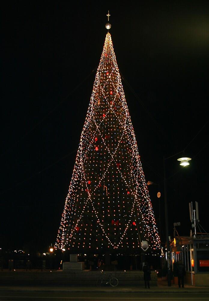 Christmas Tree in Lights by Tarryn Godfrey