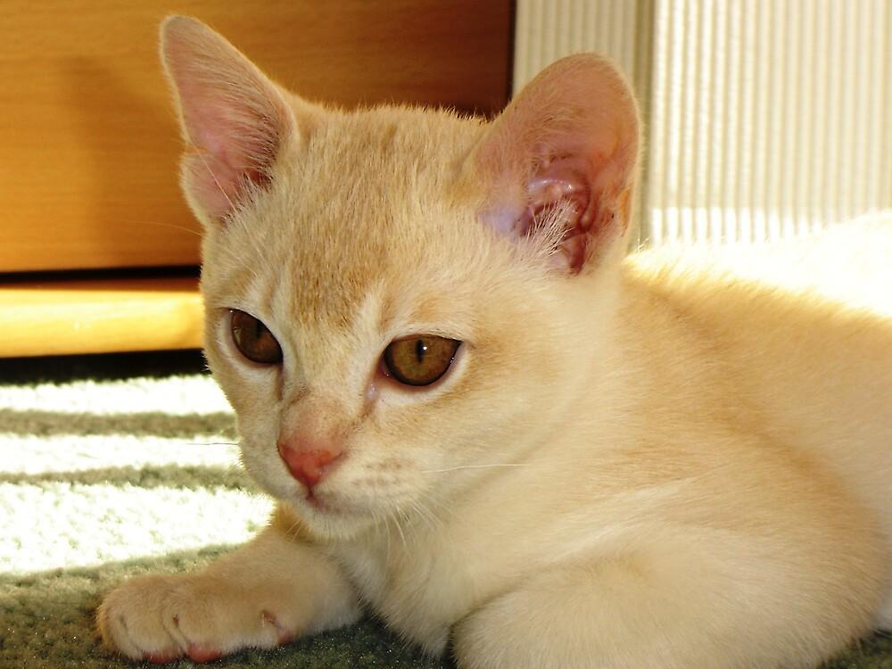 Charlie Cat by Tarryn Godfrey
