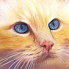 Sunny Cat by Elena Kolotusha