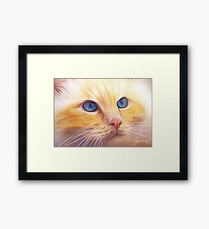 Sunny Cat Framed Print