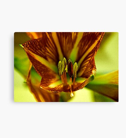Factalius Stamen Canvas Print
