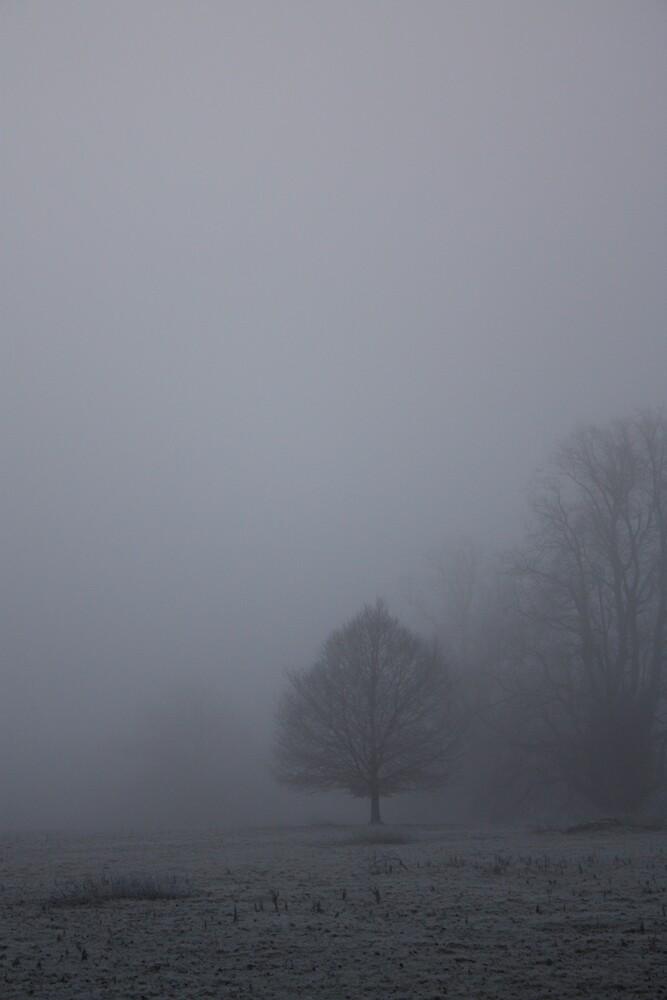 Freezing Fog 3 by Abigail Allardyce