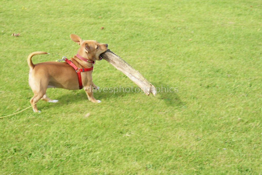 The Log Is Mine by davesphotographics