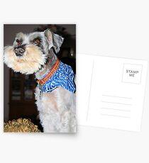 Max Boy Postcards