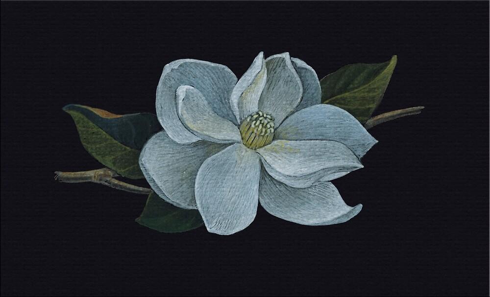 White Magnolia by Lunta