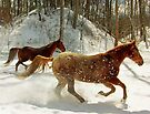 Horses in Snow by Sandy Keeton