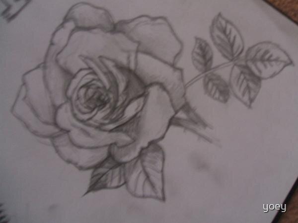 Rose by yoey
