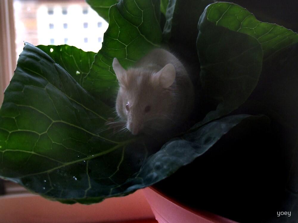 Gimli on leaf by yoey