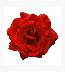 Single Red Rose. Photographic Print
