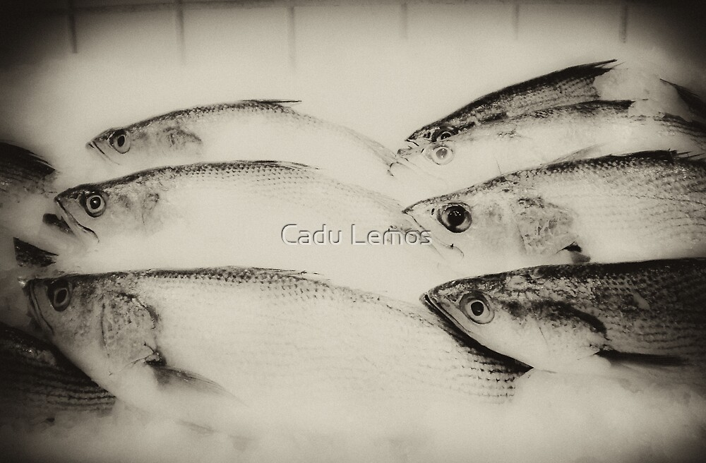 fisheye mono by Cadu Lemos