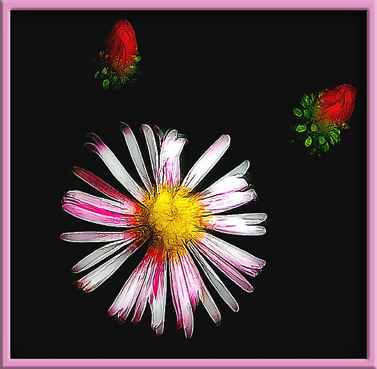 Wild Flowering by glink