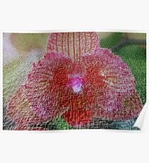 Orchid In Craquelure 3D Poster