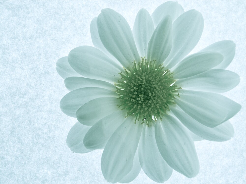 White with a Hint of Green by George Swann
