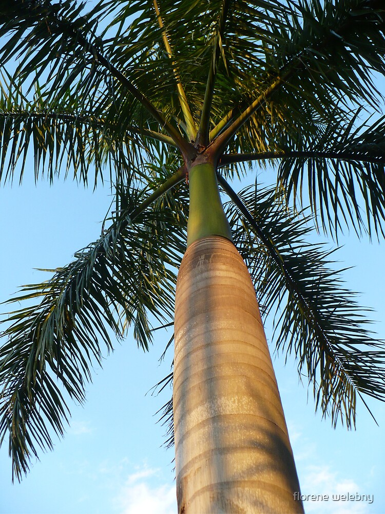 Palm Up Close by florene welebny