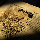 1814 Bible by HoltPhotography