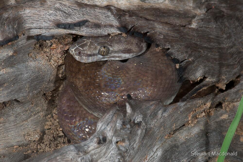 Children's python by Stewart Macdonald