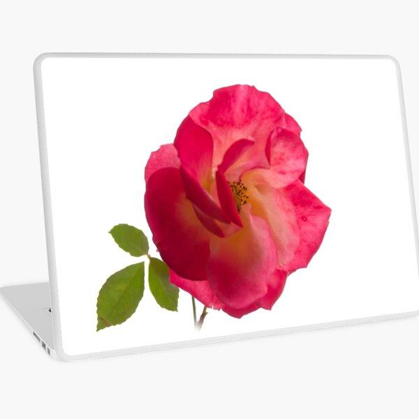 rose on white Laptop Skin