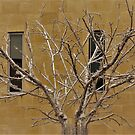 Branches And Windows by Fara