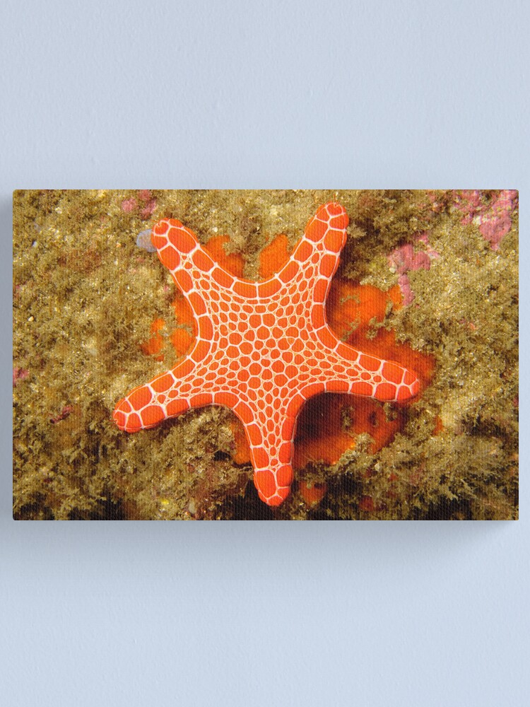 Alternate view of Red Brick Sea Star Canvas Print