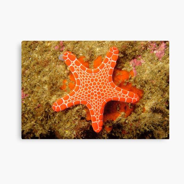 Red Brick Sea Star Canvas Print