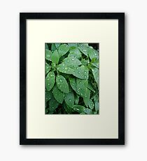 Raindrop Decorated Leaves Framed Print