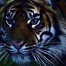 SumatranTiger by Franco De Luca Calce