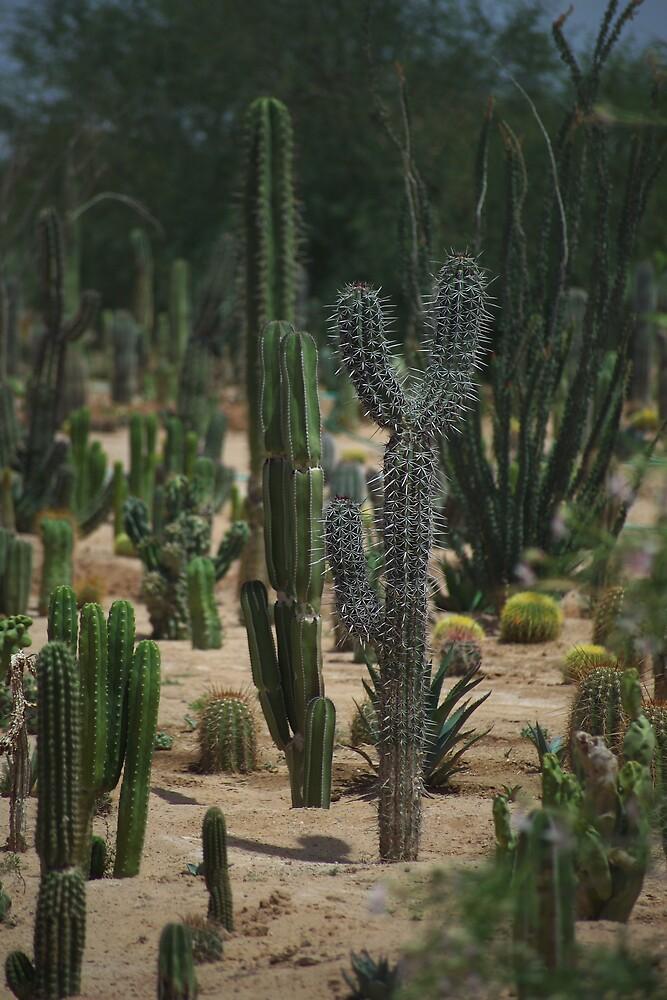 Cactus Garden by Dennis Begnoche Jr.