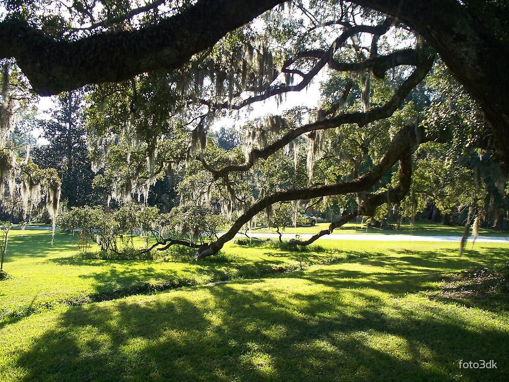 Shady Oak by foto3dk