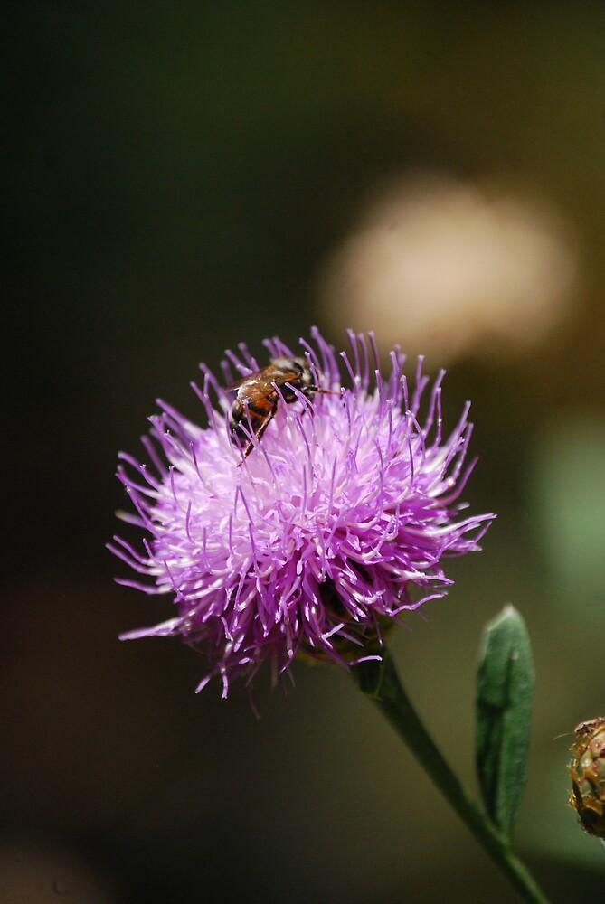 busy bee by Princessbren2006