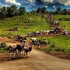 Cattle train by Lindsay Woolnough (Oram)