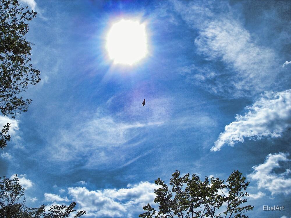 Flight of the Hawk by EbelArt