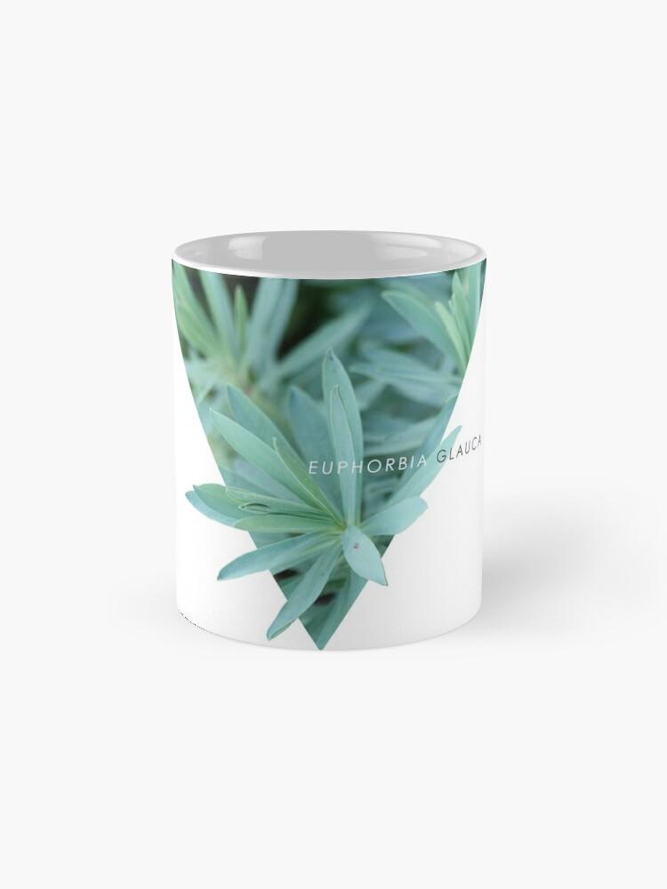 Alternative Ansicht von Euphorbia Glauca Tassen