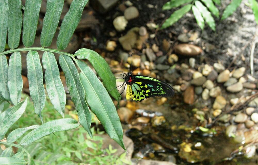 Butterfly by Tarryn Godfrey