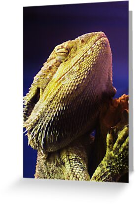 Killer dragon by Lindsay Woolnough (Oram)