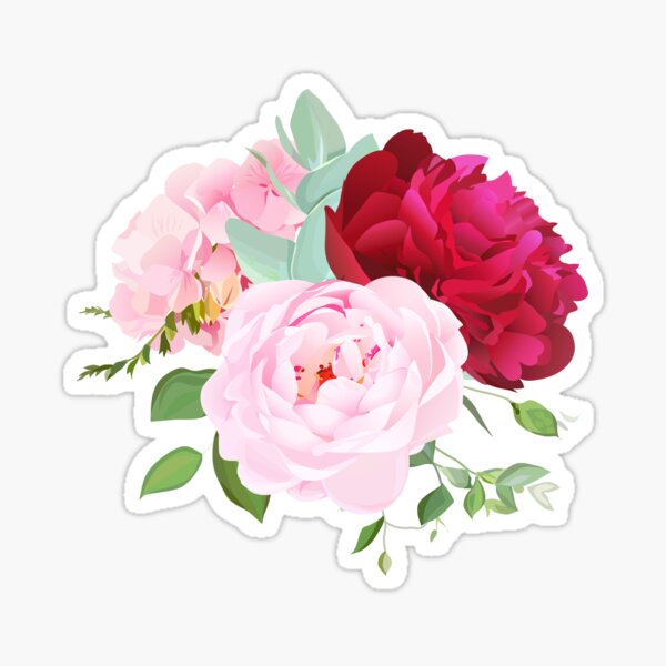 Blooming white and burgundy red peony flower, pink hydrangea, rose Sticker