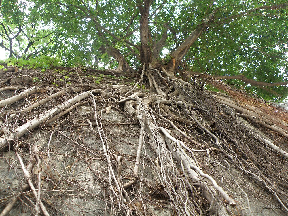 Tree roots by tash01