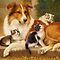 Cats and Dogs – Paintings and Photographic Art - *ONLY DOMESTIC CATS AND DOGS*