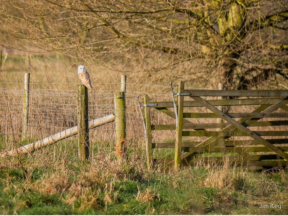 Barn Owl Olney Meadows by Jim Key