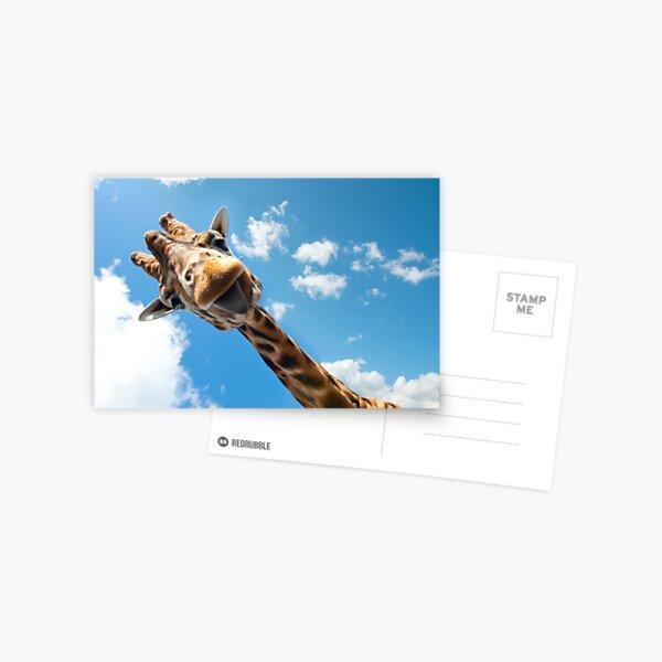 Bonjour girafe! Carte postale