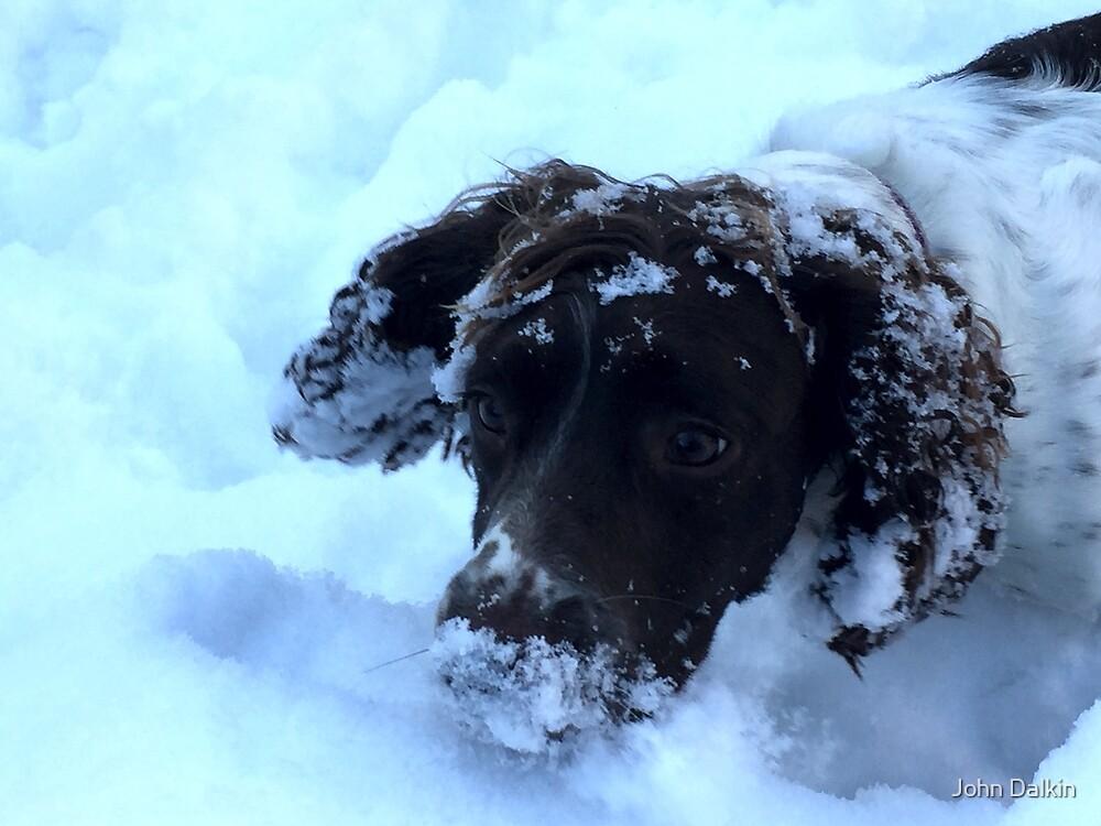 Snowy by John Dalkin