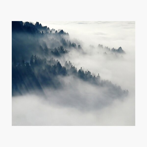 Fogy Forest Photographic Print