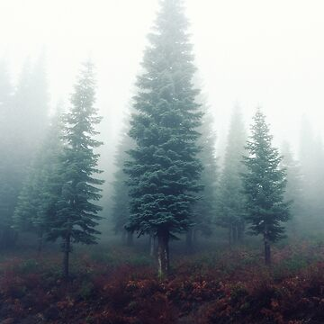 Foggy Forest by PhotoStore
